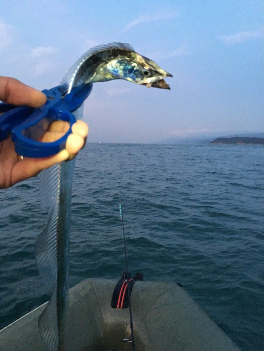 ゆうさんの投稿画像,写っている魚はタチウオ