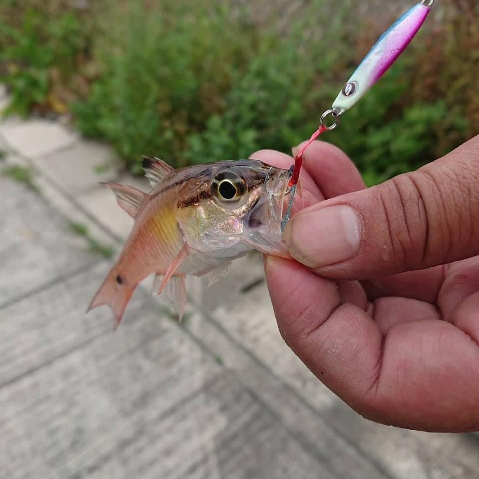 光さんの投稿画像,写っている魚はネンブツダイ