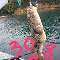 玲眞莉王さんの佐賀県での釣果写真