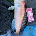 クロアルさんの石川県白山市での釣果写真
