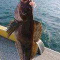新しいフォルダさんの宮城県でのアイナメの釣果写真