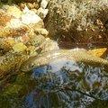 マチャノさんの山形県天童市での釣果写真