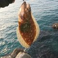みっちぃさんの石川県かほく市での釣果写真