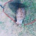 リンダマンさんのコウイカの釣果写真