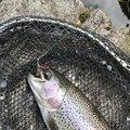 yhoさんの大分県での釣果写真