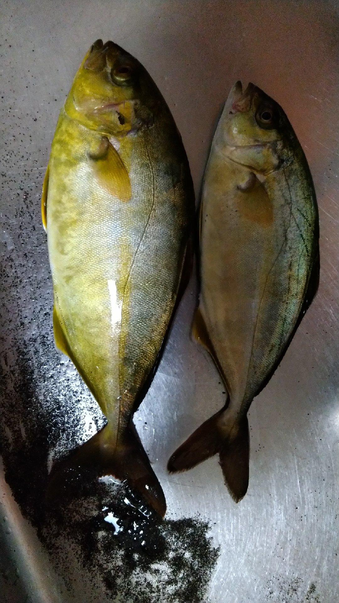 ATSUSHIさんの投稿画像,写っている魚はカンパチ