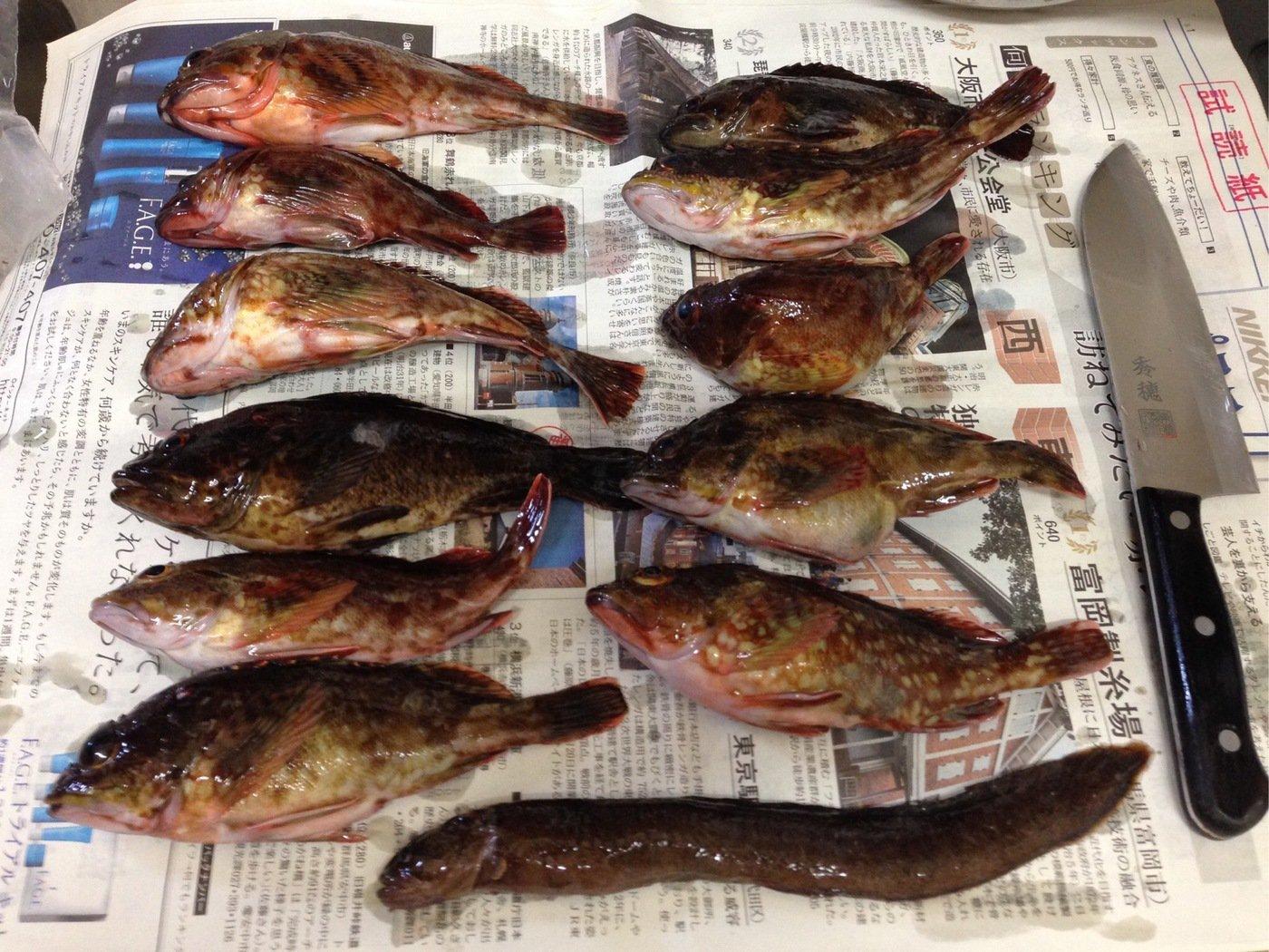 たかさんの投稿画像,写っている魚はカサゴ