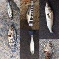 TAKUさんの福岡県中間市での釣果写真
