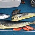 gonzuimaniacさんの沖縄県島尻郡でのシイラの釣果写真