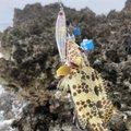 もーるさんの沖縄県での釣果写真