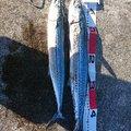 MWAMさんの石川県かほく市での釣果写真