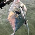 毒モップさんの沖縄県での釣果写真