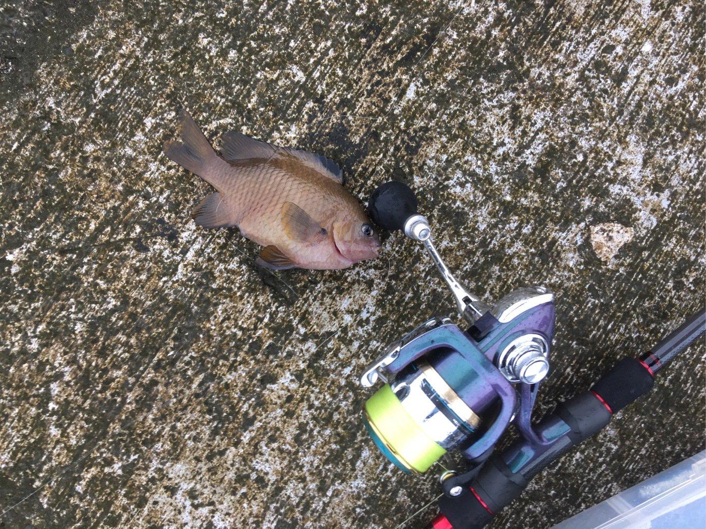 かつてのバスプロさんの投稿画像,写っている魚はスズメダイ