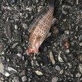 yu-ki69さんの和歌山県での釣果写真