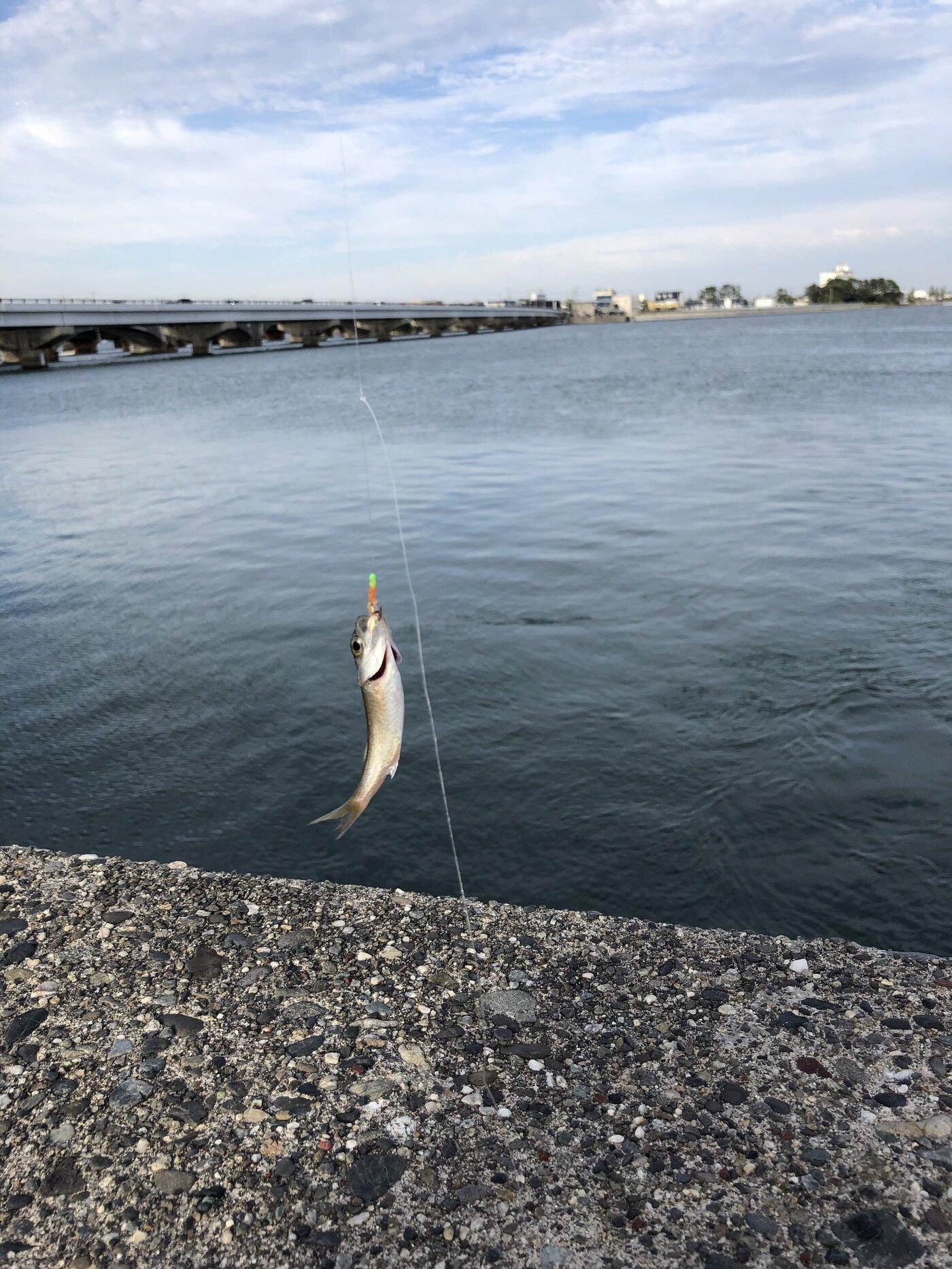ノエルさんの投稿画像,写っている魚はアジ,マサバ