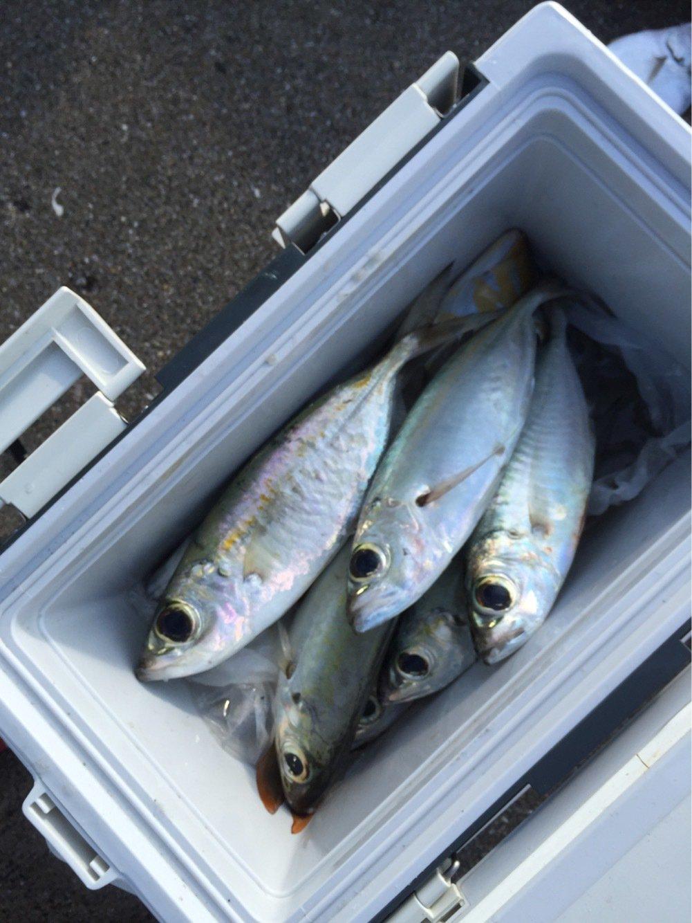 ルアー戦士ロストマンさんの投稿画像,写っている魚はメアジ