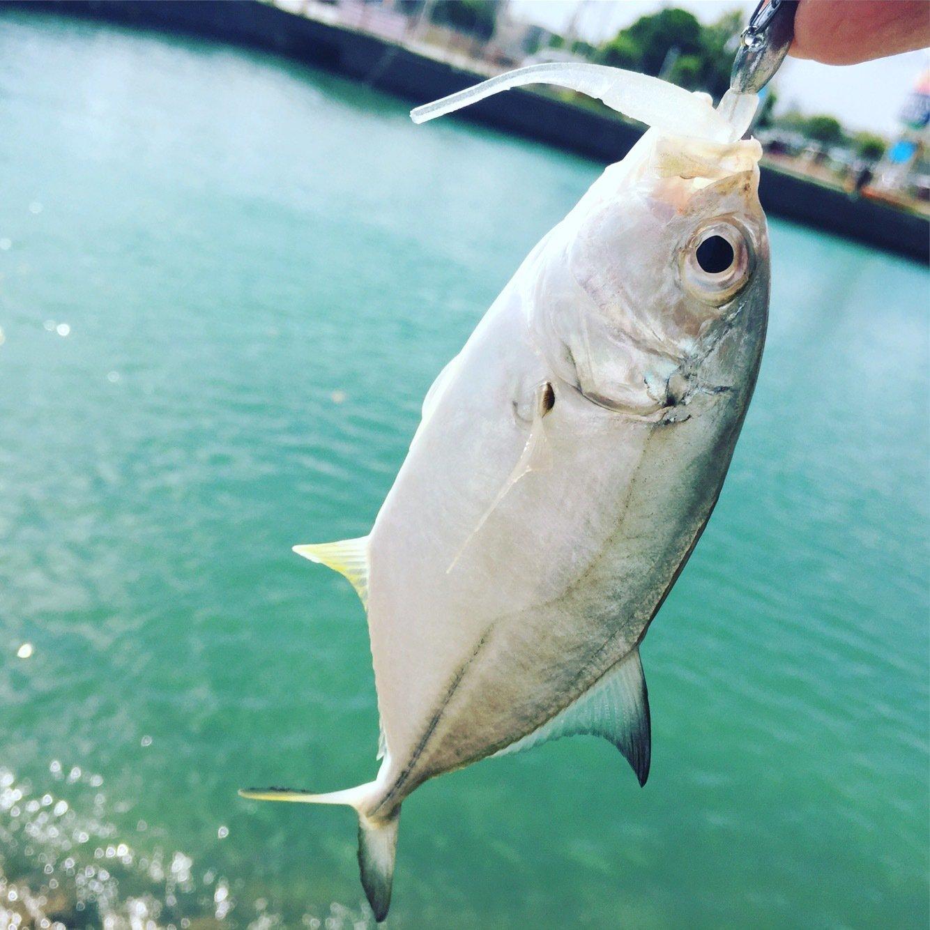 ルアー戦士ロストマンさんの投稿画像,写っている魚はロウニンアジ