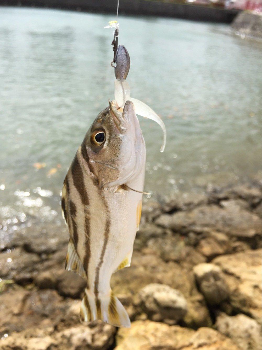 ルアー戦士ロストマンさんの投稿画像,写っている魚はコトヒキ