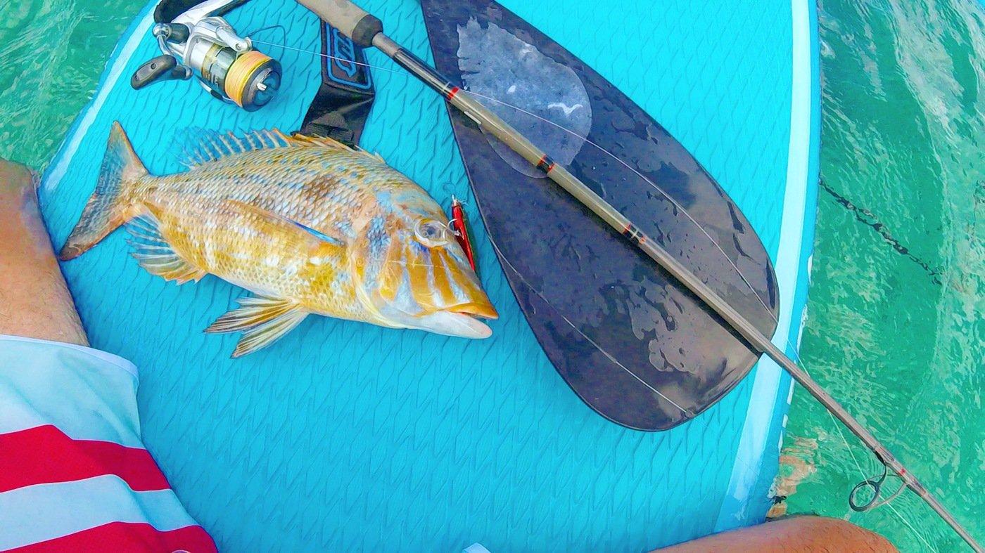 ノリだーさんの投稿画像,写っている魚はハマフエフキダイ
