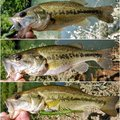 なぎ@釣り歴2年目さんの宮崎県での釣果写真