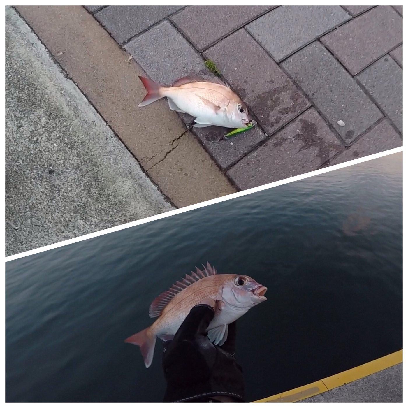 HiroHanaFisingさんの投稿画像,写っている魚はマダイ