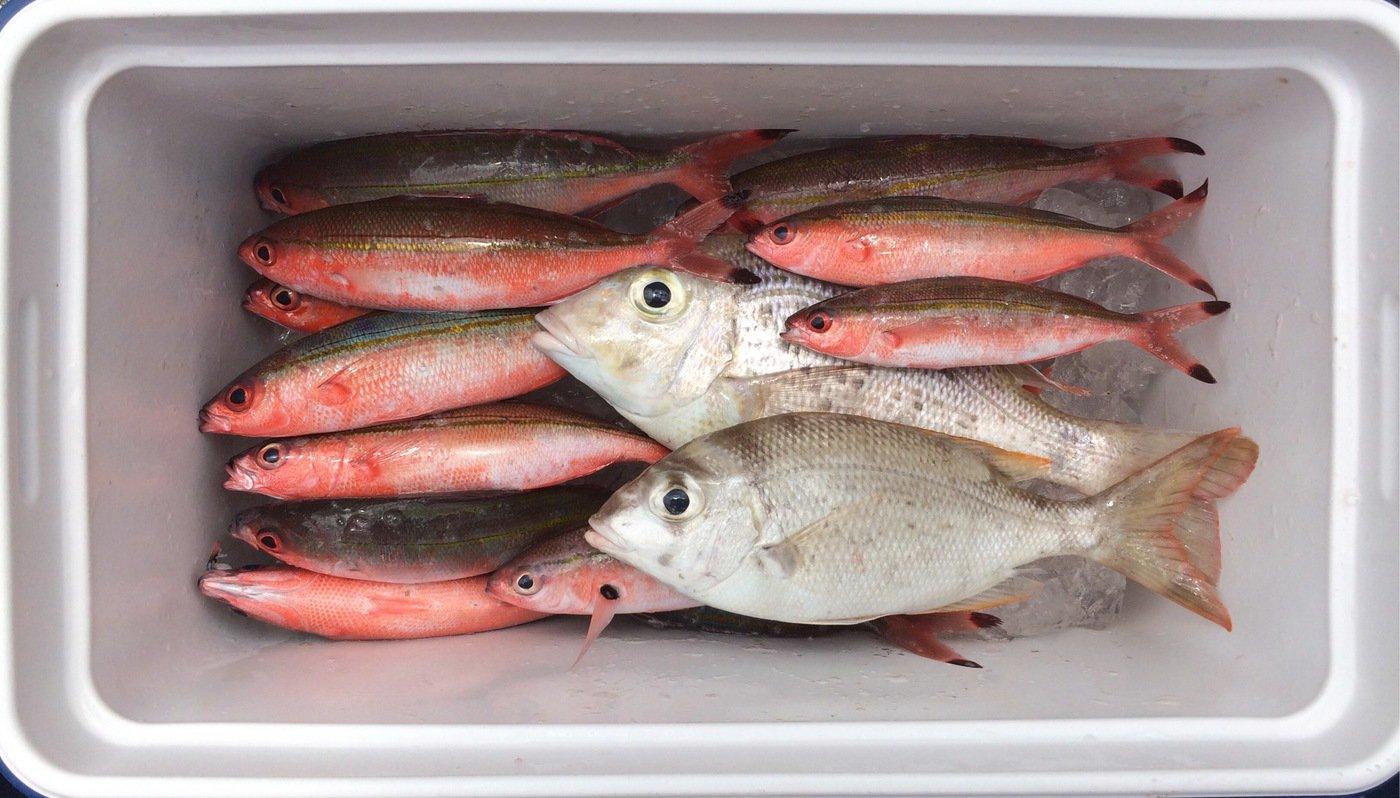 gonzuimaniacさんの投稿画像,写っている魚はタカサゴ