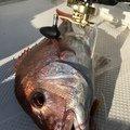 ヤマツリよりポイント派さんの熊本県での釣果写真