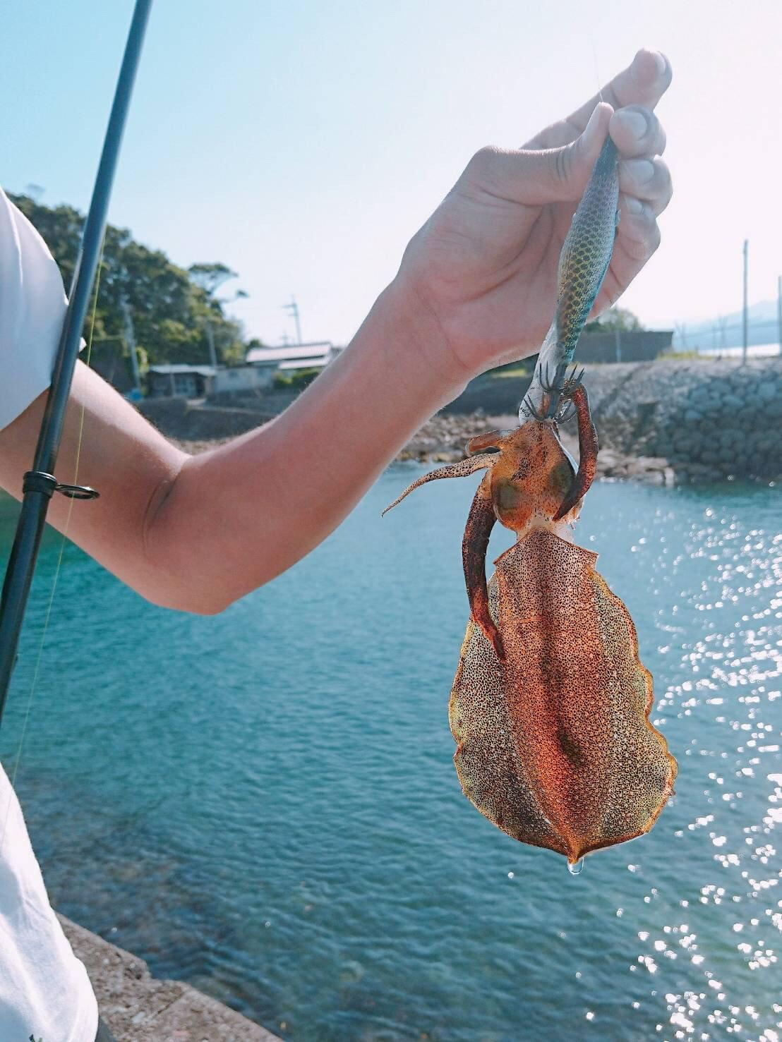 テラざわすさんの投稿画像,写っている魚はアオリイカ