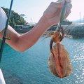テラざわすさんの徳島県海部郡での釣果写真