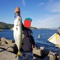 凜咲さんの大阪府での釣果写真