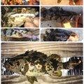 ヨッシーさんの愛知県常滑市での釣果写真
