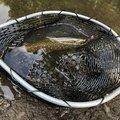 Ryo Takanoさんの群馬県での釣果写真