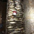 たいたいさんの大分県での釣果写真