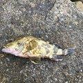 きずしさんの岡山県備前市での釣果写真