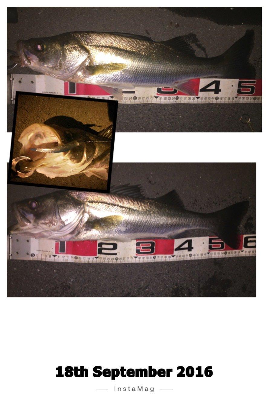 Anglerさんの投稿画像,写っている魚はスズキ