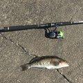 65chevyさんの秋田県での釣果写真