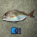 カルピスさんの広島県での釣果写真