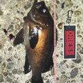 TOMOさんの富山県での釣果写真