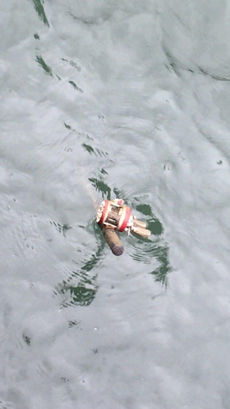 sJimさんの投稿画像,写っている魚は