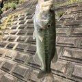 yuichiさんの宮崎県での釣果写真