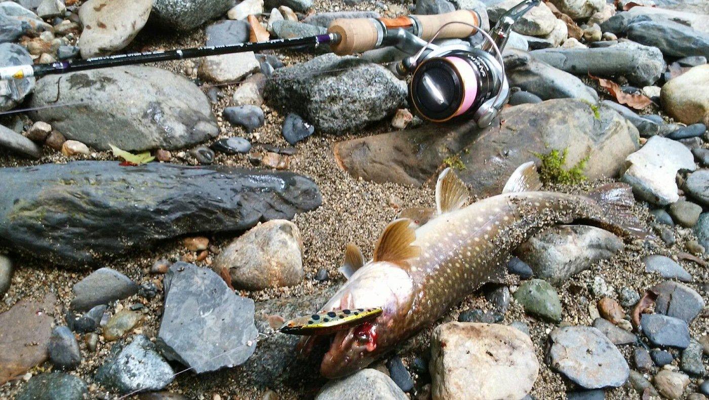 takasixさんの投稿画像,写っている魚はイワナ