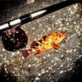釣り好きドラマーさんの神奈川県横須賀市でのカサゴの釣果写真