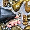 takasixさんの岩手県紫波郡での釣果写真