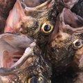 海坊主さんの熊本県での釣果写真