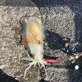 ヒデさんの和歌山県有田市での釣果写真
