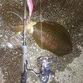 しまさんの広島県での釣果写真