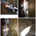 SBHさんの熊本県での釣果写真
