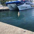 aoricyuさんの新潟県村上市での釣果写真