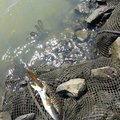ひろしさんの宮城県東松島市での釣果写真