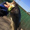 Raiki さんの高知県での釣果写真